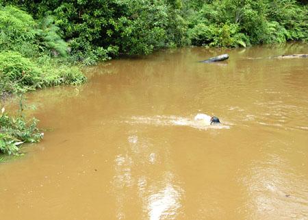 rivercheck2.jpg